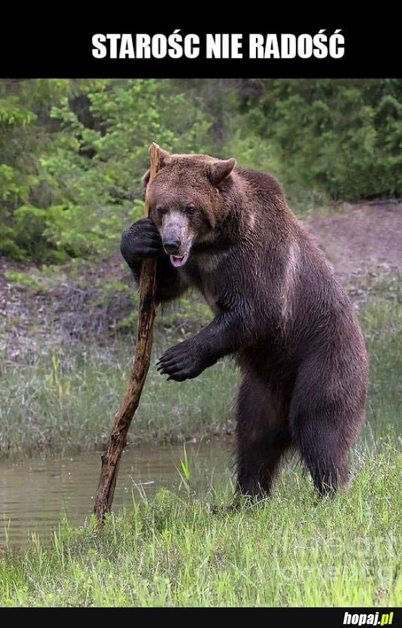 Niedźwiedzieł
