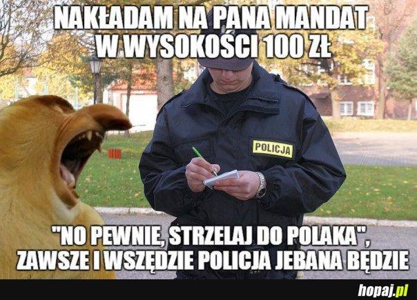 NO PEWNIE, STRZELAJ DO POLAKA
