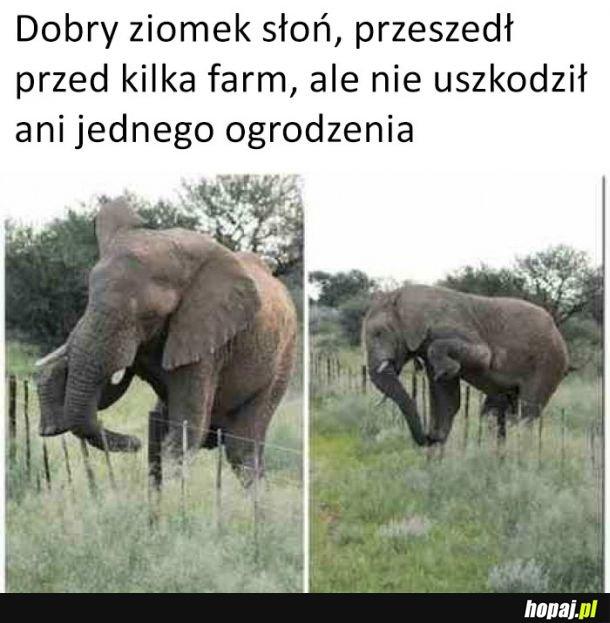 Dobry ziomek słoń