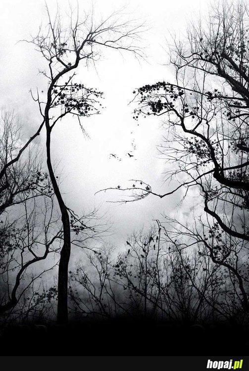 Widzicie coś poza drzewami?