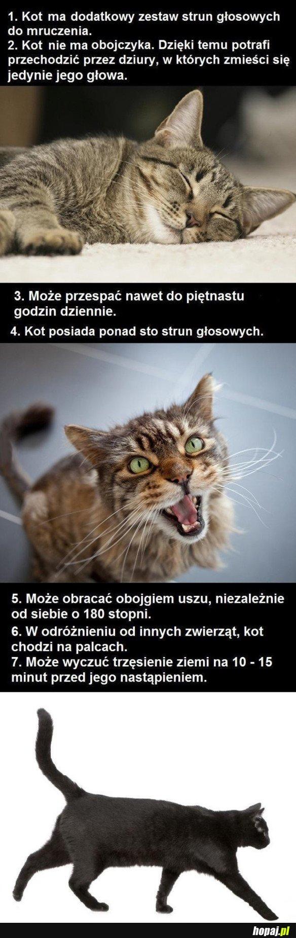 Kilka ciekawostek o kotach