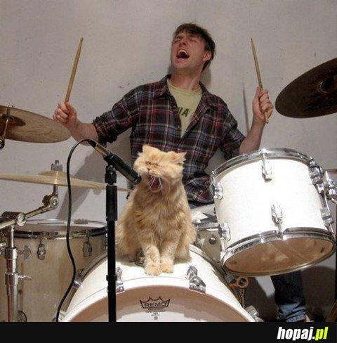 Cat Yeah!