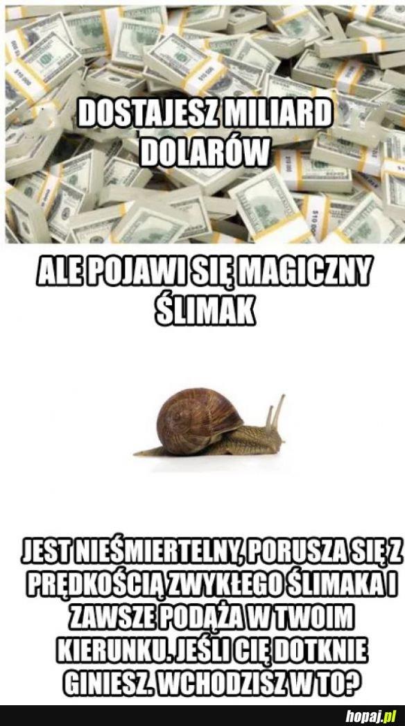 Magiczny ślimak