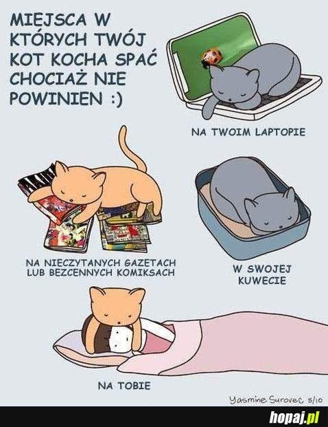 Miejsca w których koty kochają spać