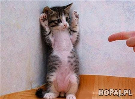 Ręce do góry!