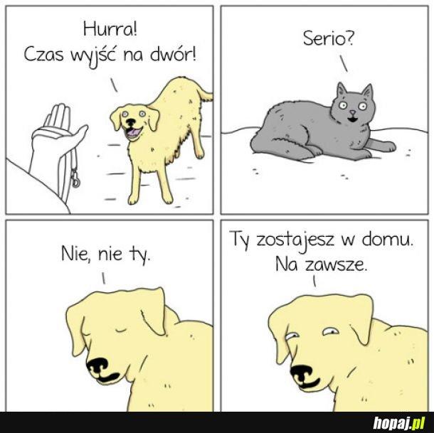 Biedny koteł...