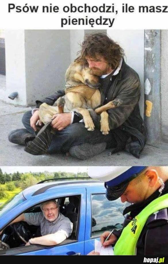 Psy to cudowne zwierzęta