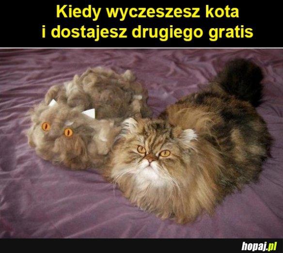 Wyczesany kot