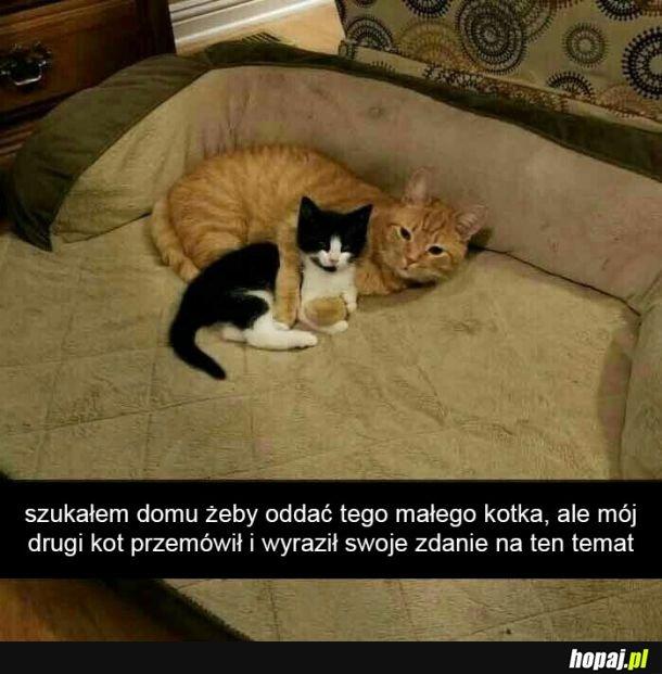 Kot przemówił
