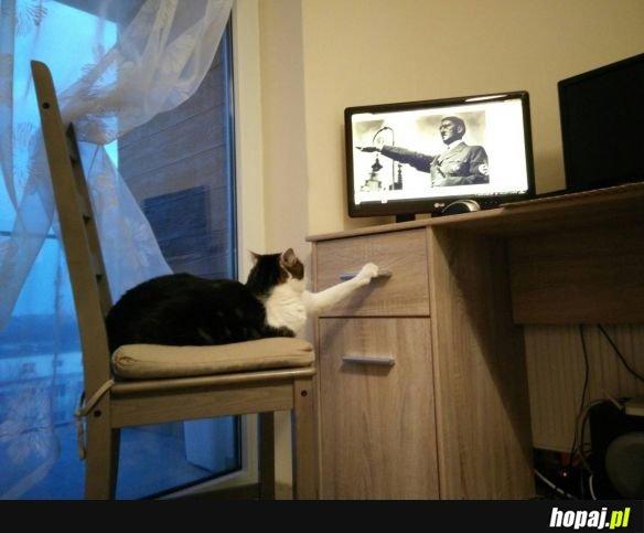 Koty takie s�