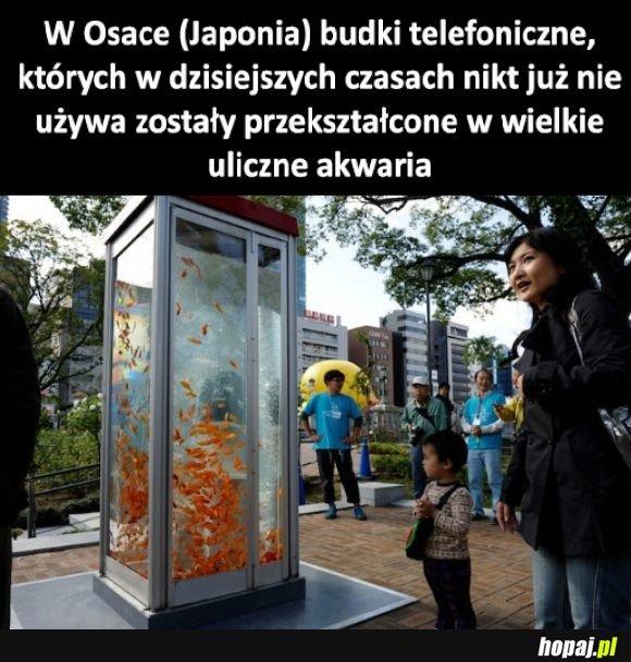 Wspaniały pomysł!