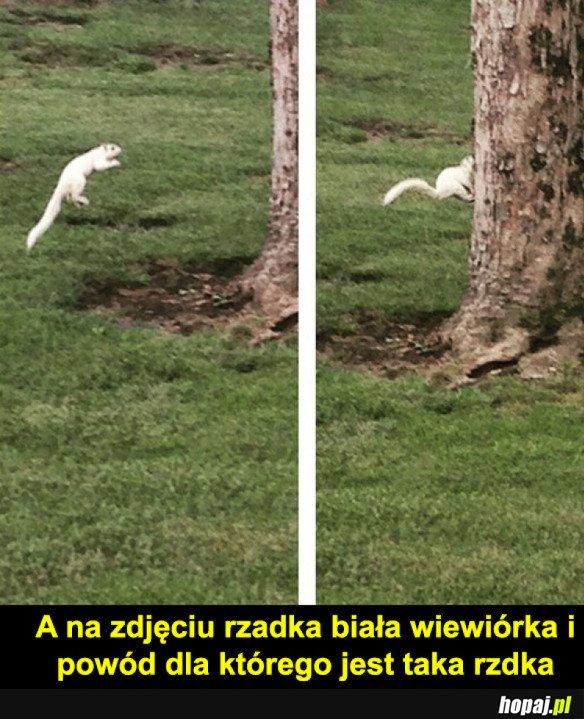 Wiewi�rka