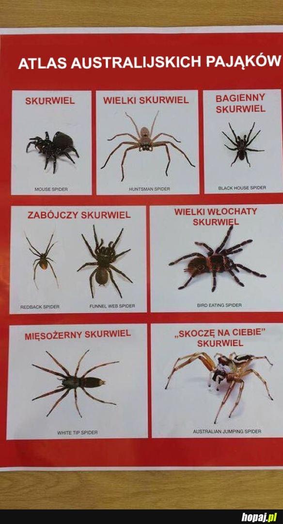 Australijskie pająki