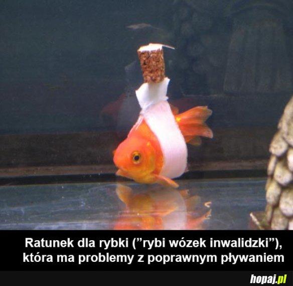 Ratunek dla rybki