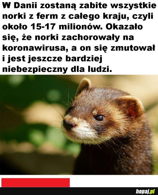 Los norek:(