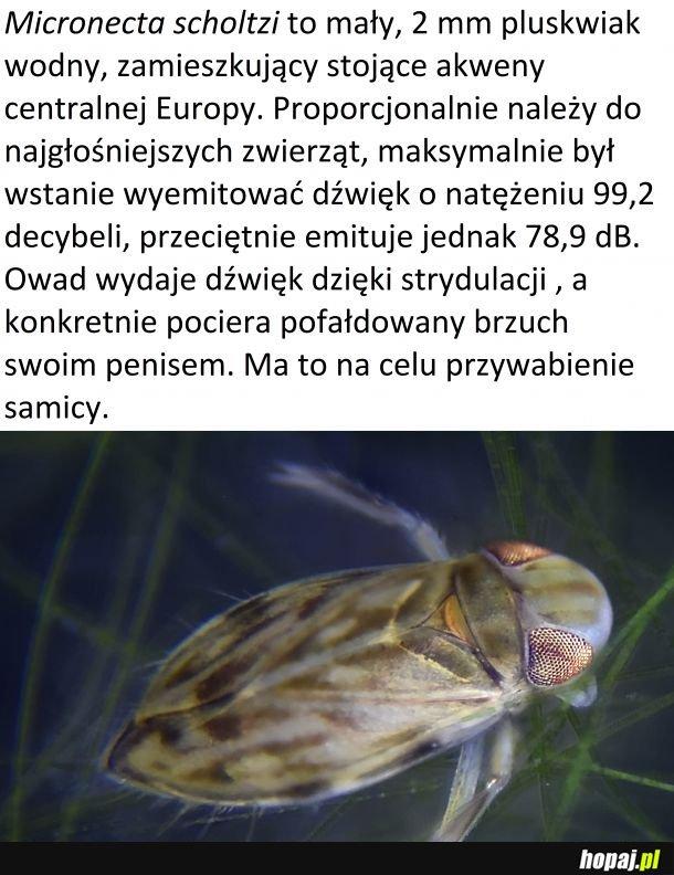 Czwartek z owadzią ciekawostką #27