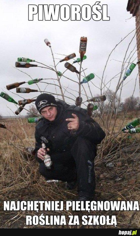 Piworośl