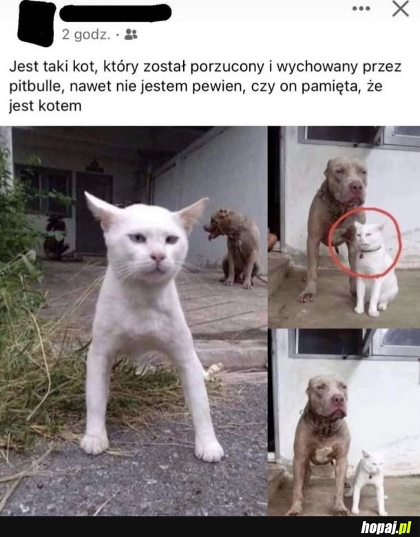 Pitkott