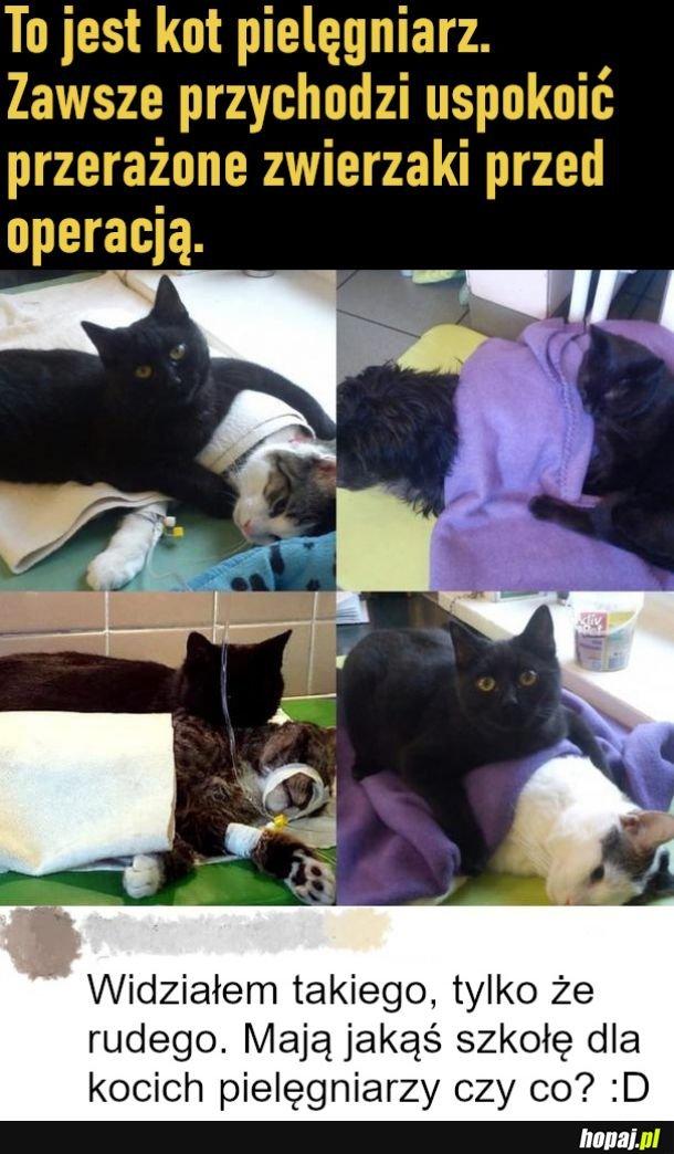 Kot pielęgniarz