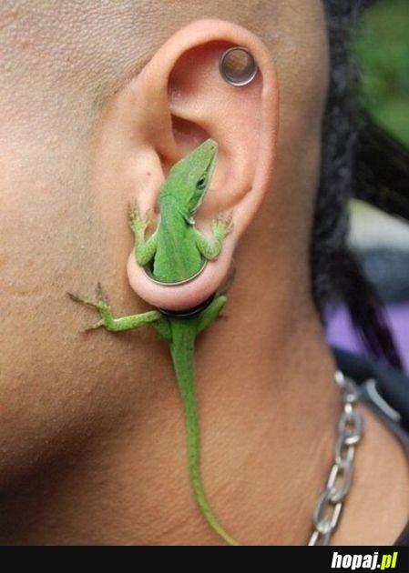 A ja się zastanawiałem, po co się robi takie dziury w uszach;p