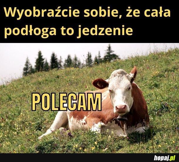 Krowy to mają dobrze! No może bez tego całego mordowania ich na mięso...