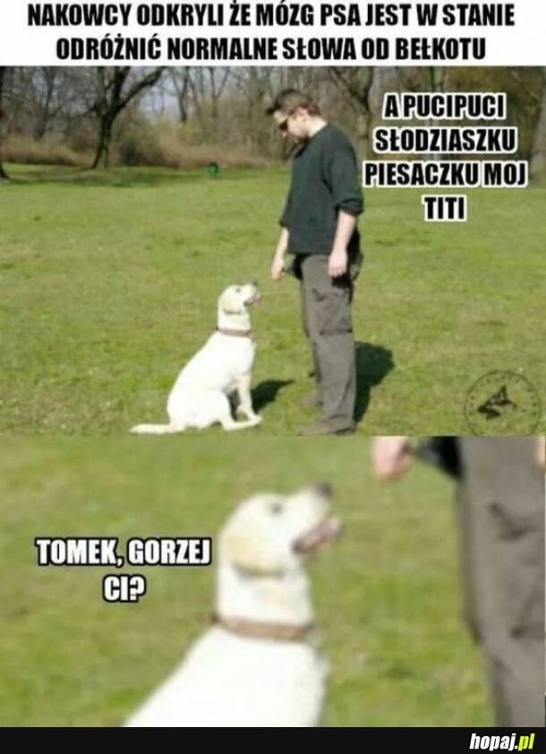 Psy są mądre