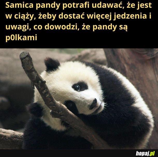 Moja ex była pandą