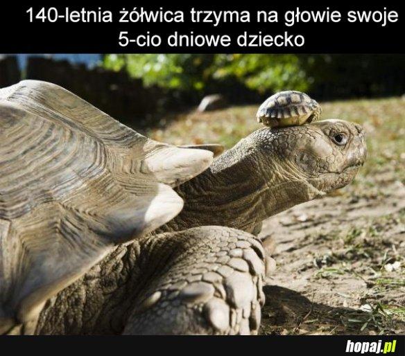 Matka z zółwiem