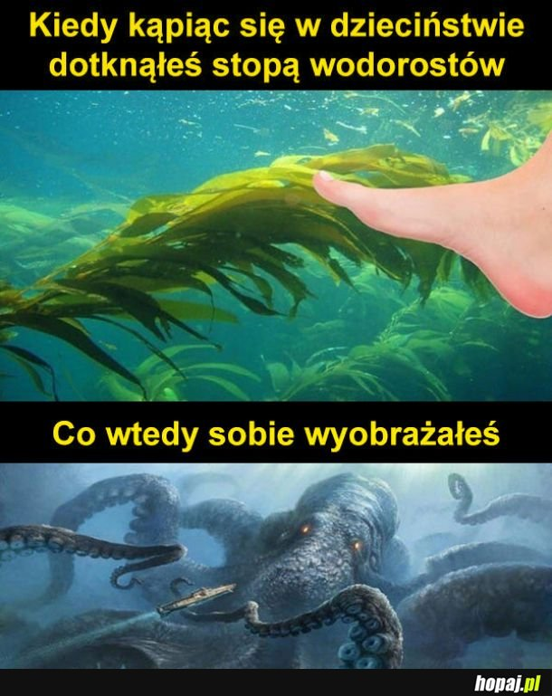 Wodorosty