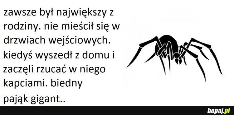 Biedny pająk..