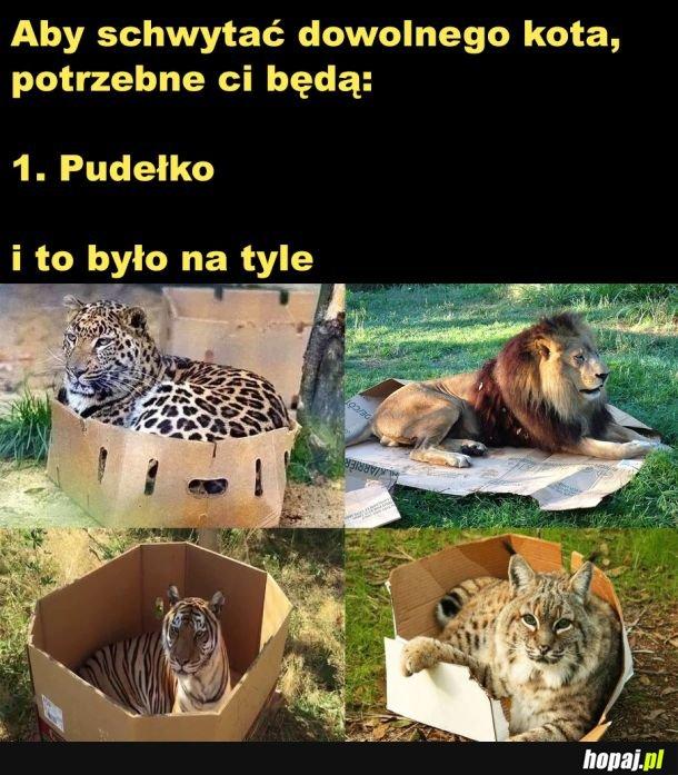 Wszystkie kotki są takie same