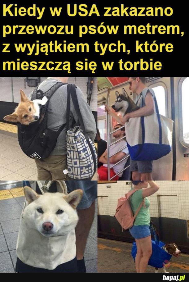 Pies w torbie ikea wygrał xD