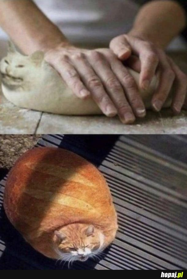 I don't wanna be bread, aaa!
