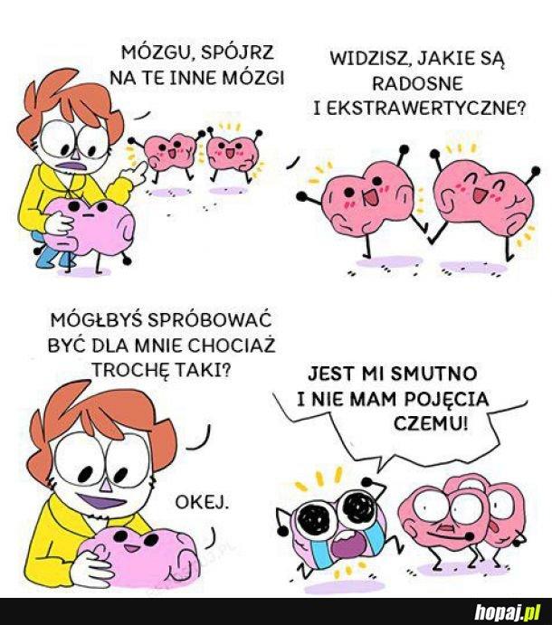 Inne mózgi