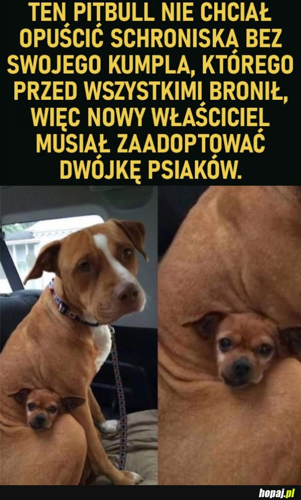 Dwupak