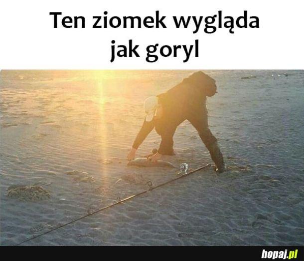 Goryl