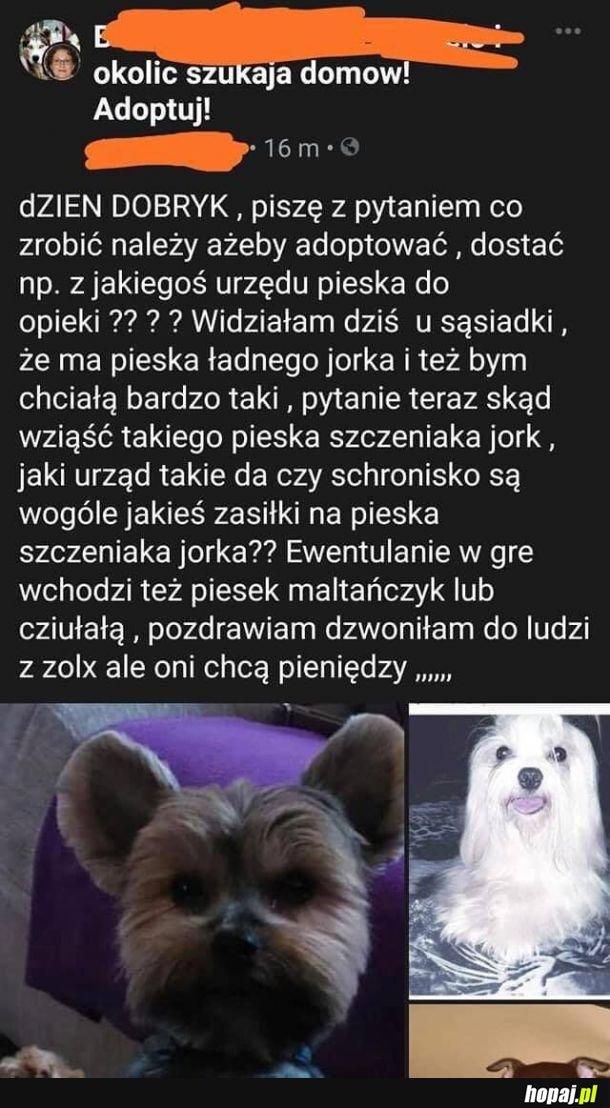 Dej psa