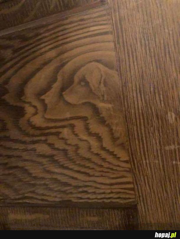 Pies przeklęty w podłodze zaklęty