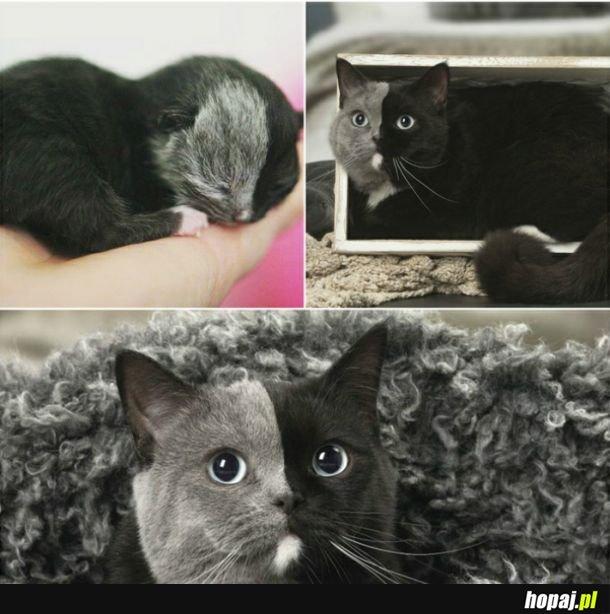 Najładniejszy kotek