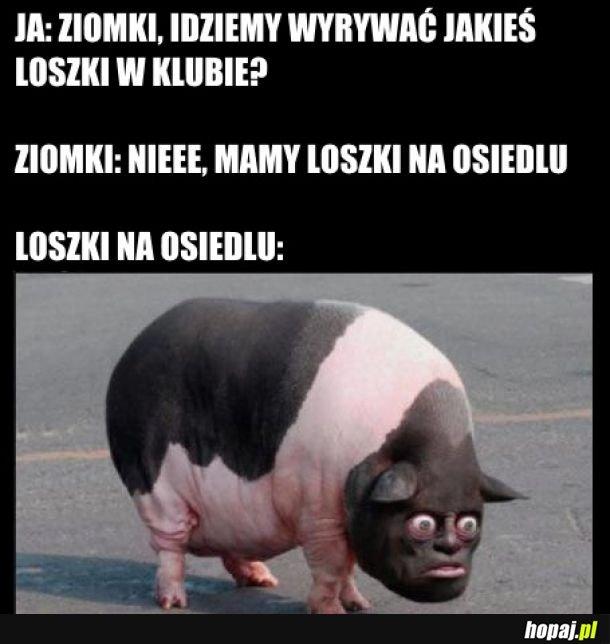 Fajna Loszka
