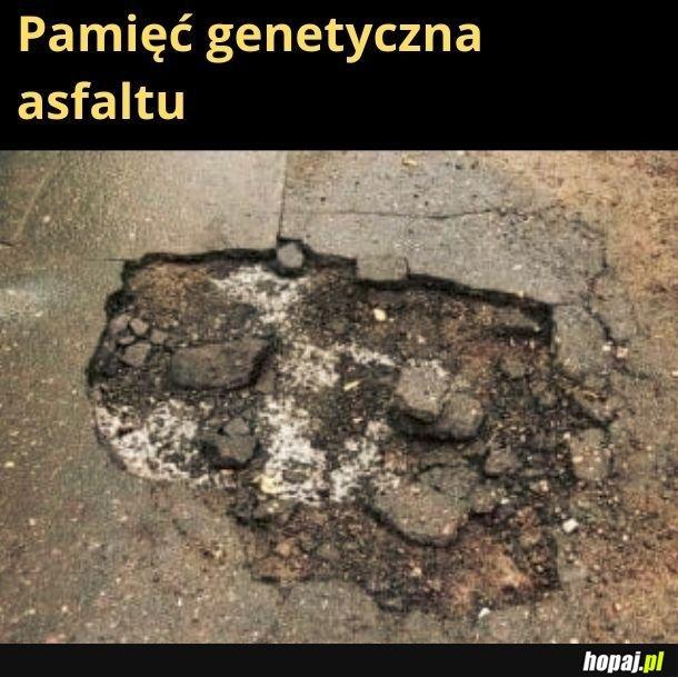 Pamięć genetyczna asfaltu