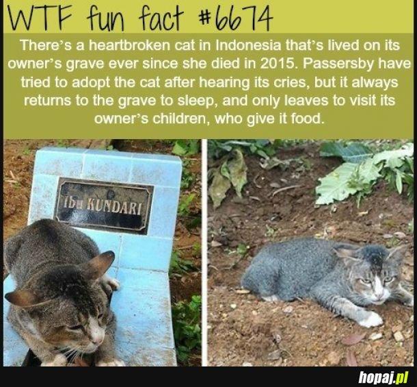 Koty też przywiązują się do ludzi.