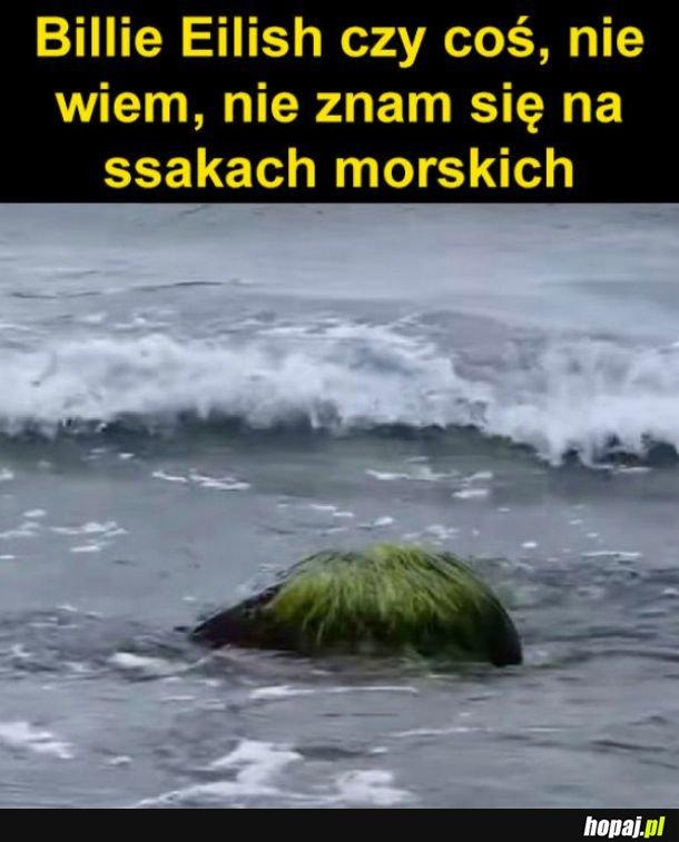 Ssak morski