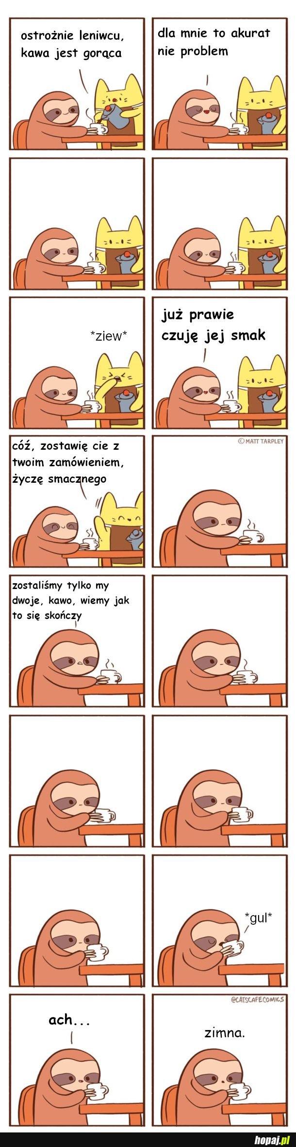 Leniwiec w kawiarni