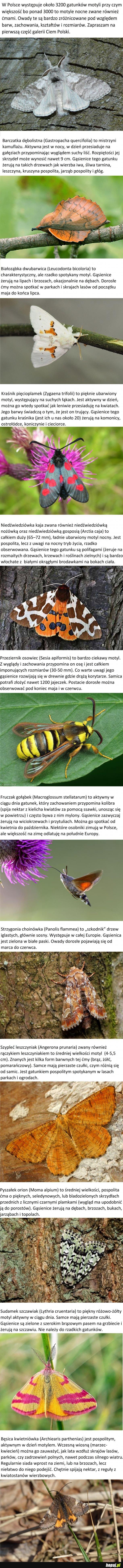 Ćmy Polski2