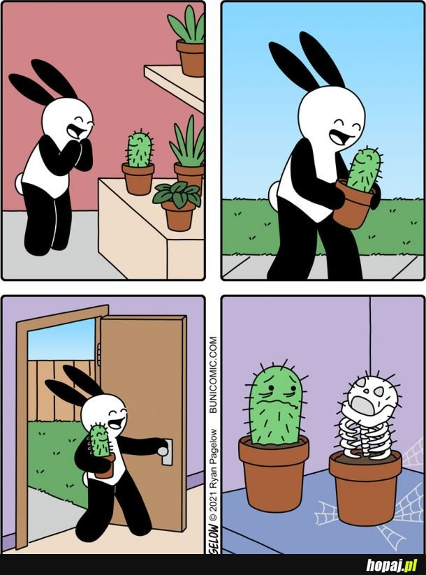 Nowy dom dla roślinki