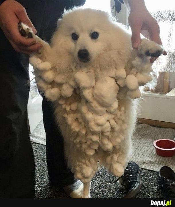Pies i zima