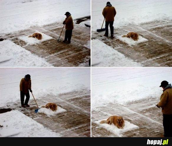 Leniwy pies