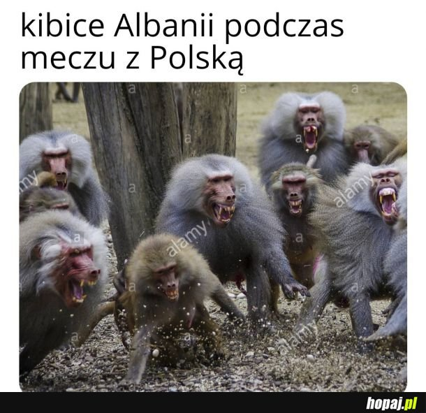Kibice Albanii