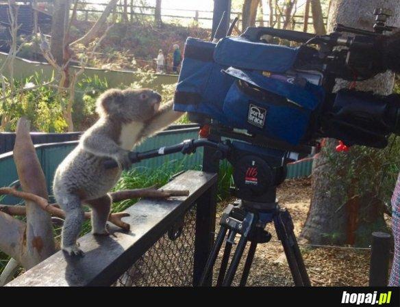 Koala TV